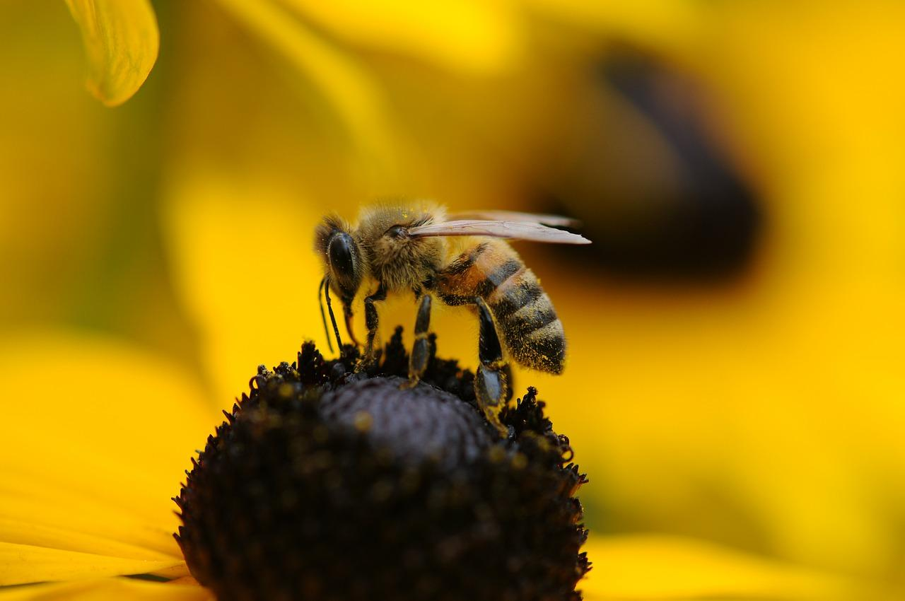 How long does a bee live? Is it possible to save her from death? 26