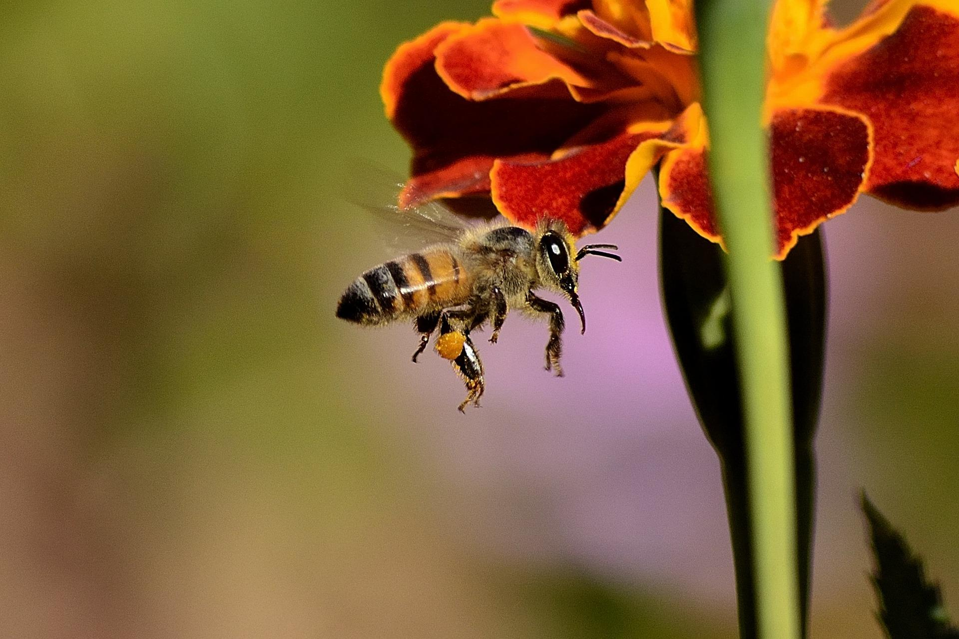 bee and the flower relationship