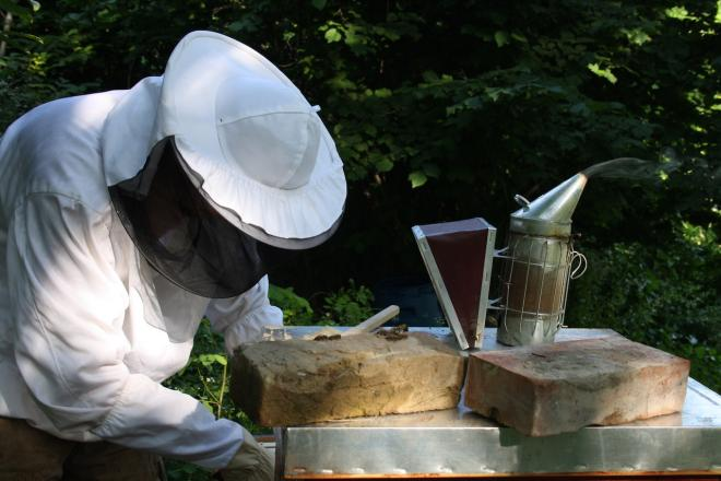 The number of beekeepers in theEU is falling down