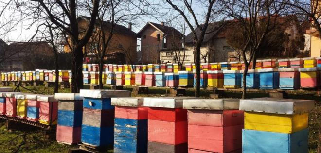 Late winter beekeeping checks – What to do and what to avoid?