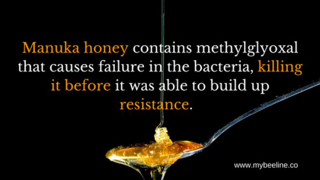 manuka honey kill bacteria