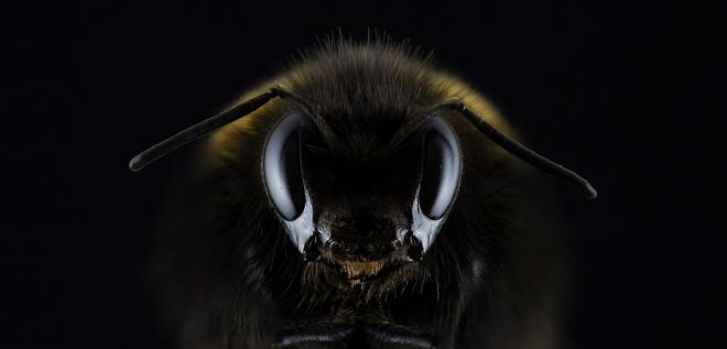 How dangerous are killer bees? What to do if you encounter them?
