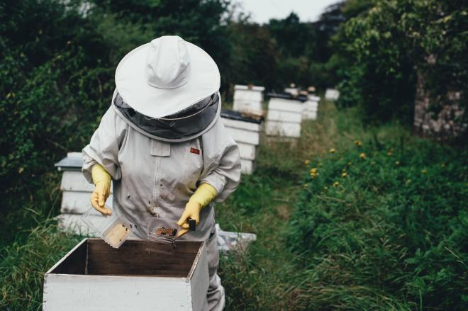 How to choose bee suit?