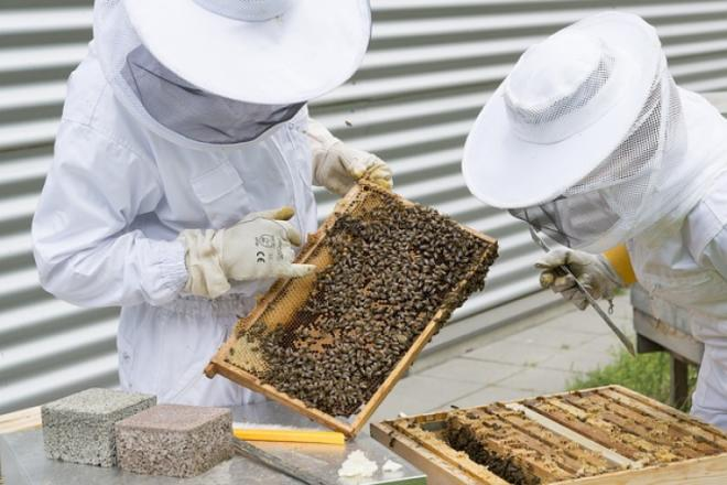 7 beekeeping tips every beginner should know