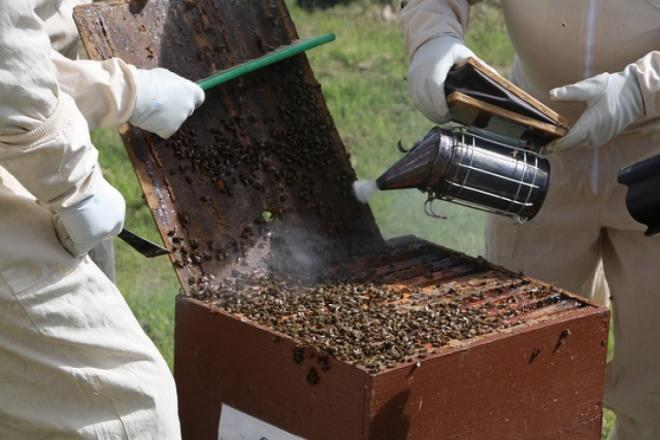 Bee smoker - why is it an essential tool for beekeepers?