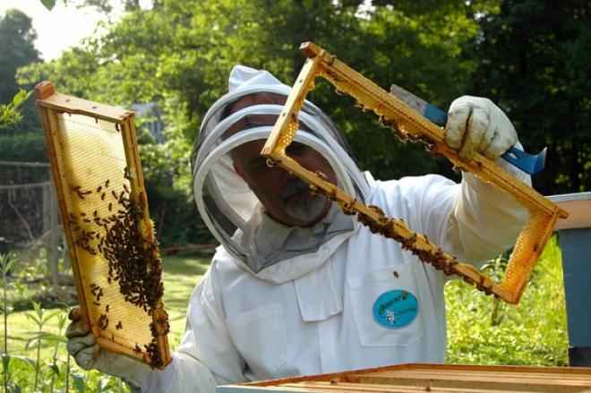 5 reasons why beekeeping is awesome!