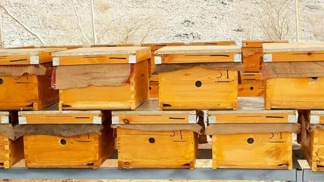 5 Best Bee boxes for sale!