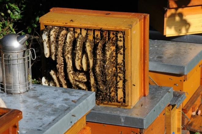 How to use a bee smoker?