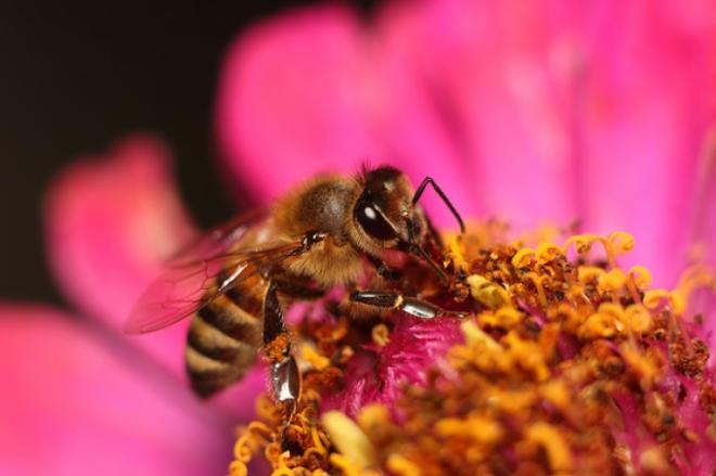 Recognizing honey bee diseases and their control - MyBeeLine