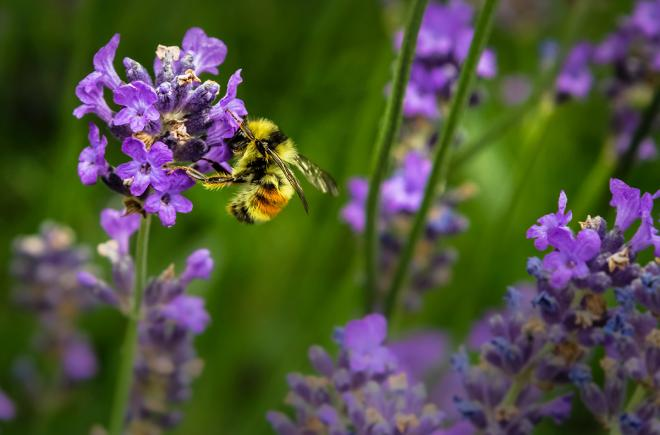 EU agrees on total ban of bee-harming pesticides