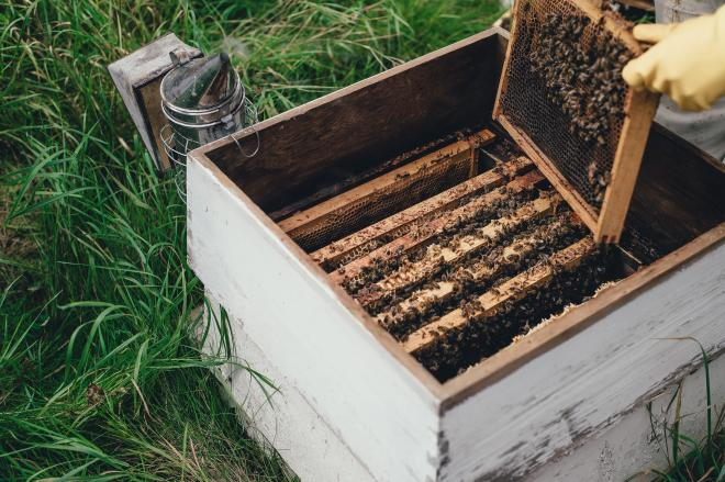 How do beekeepers calm bees?