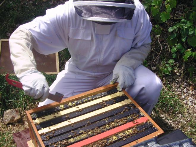 What is propolis and what are benefits of using it?