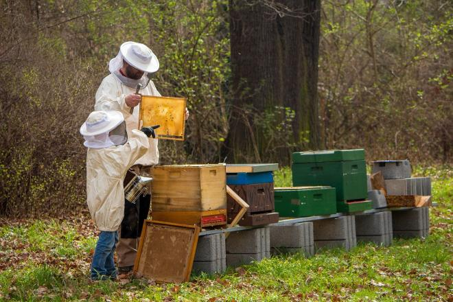 How to make your beehive thrive?