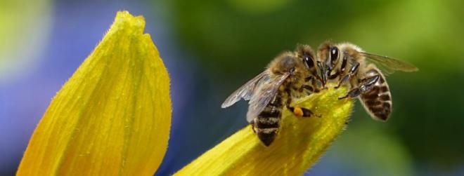 20 amazing facts about honey bees which you didn't know