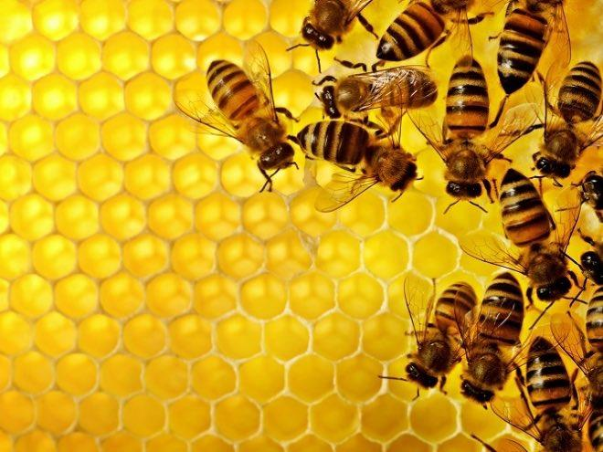 How can we differentiate 100% pure honey and adulterated honey?