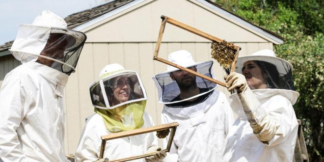 What equipment should I get as a beginner beekeeper?