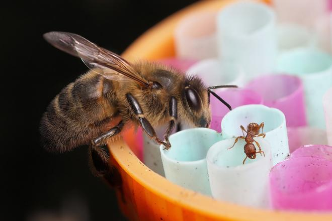 Top 5 bee feeders and how to use them?