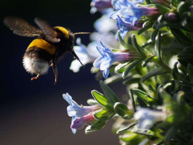 Fantastic Facts You Need to Know About Bumblebees