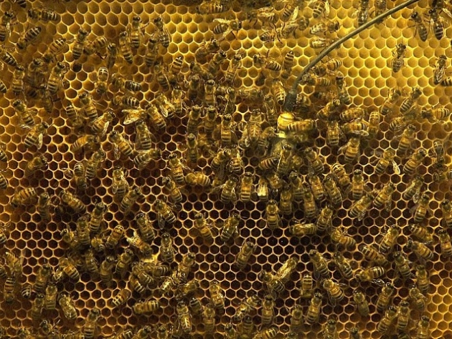 With vibration to the situation in the hive