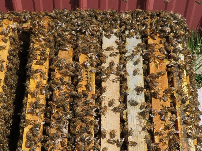 Equalizing: The bee's knees in Maria's apiary