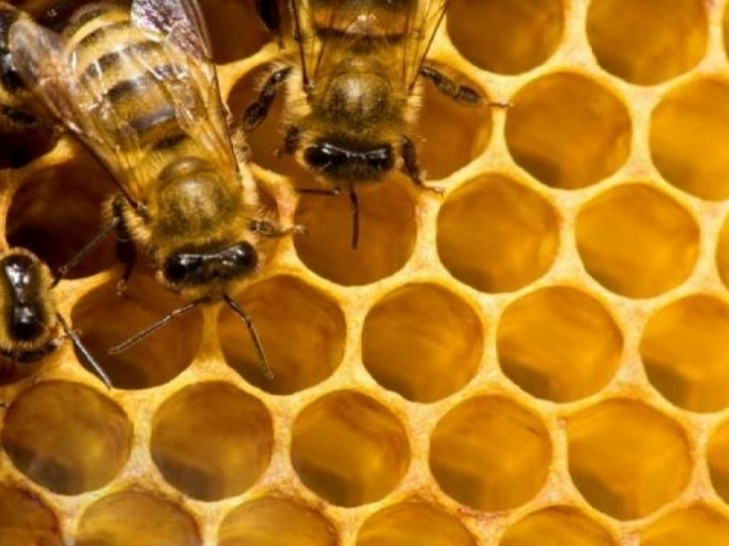 Parasites change bees chemical profile