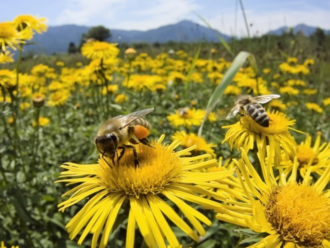 Explore Bees: Types of bees