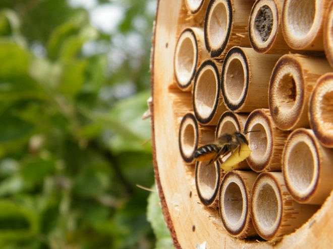 Do Bee Hotels really work?