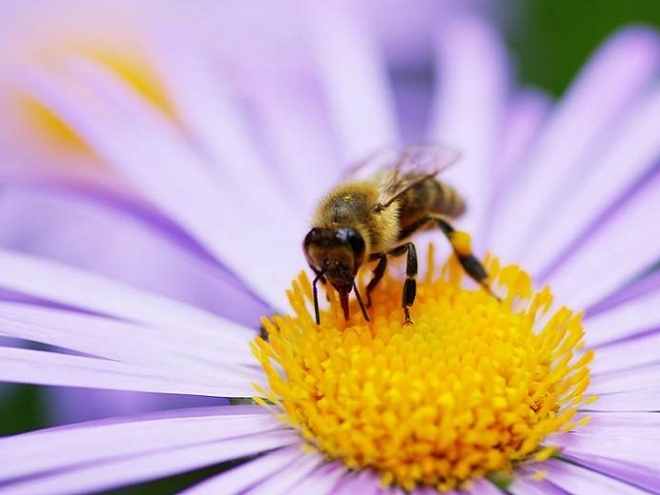 Bees get happier and more optimistic after eating a sweet treat