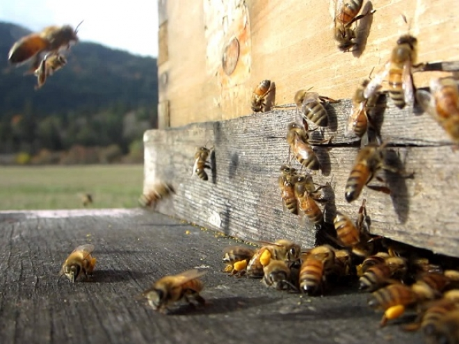 Beekeeping from passion to profession
