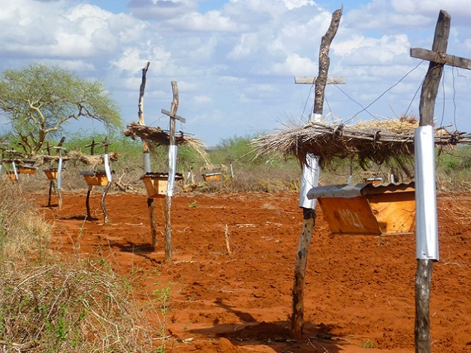 Natural solution: Bee fence in Africa save farmers and their crops