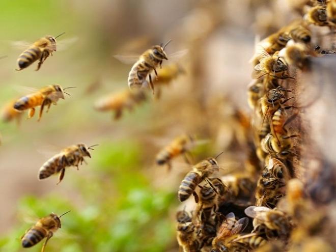Federal Court decided, the bees have won!