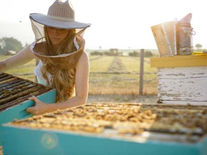 5 awesome beekeeping Facebook pages that we love