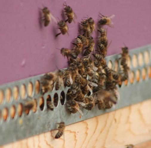 Winter Beekeeping in December… a time to relax and reflect