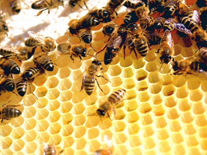 How the bees life cycle works?