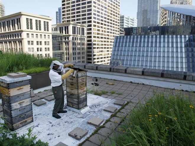 Urban beekeeping keeps cities healthy