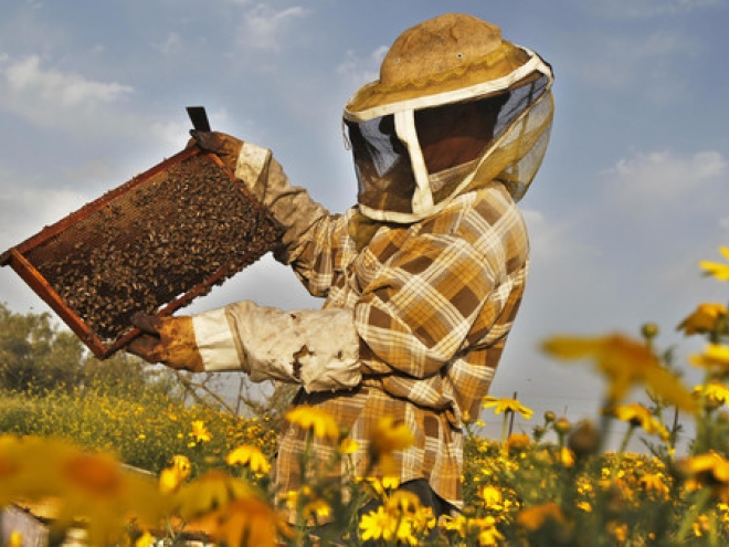 Honey production in the United States is falling again
