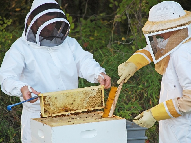 When to harvest honey -  Tips & tricks