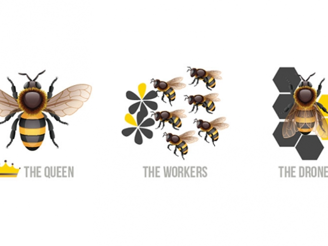 Roles of bees in a hive