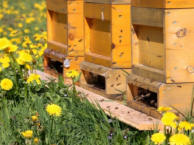 Amazing bees: they learn and teach like humans do!