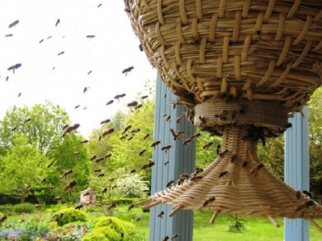 Sun Hive: Bee-friendly hive for natural beekeeping