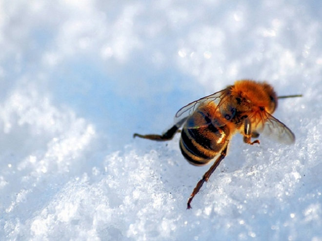 Best tips for getting your honeybees ready for winter!