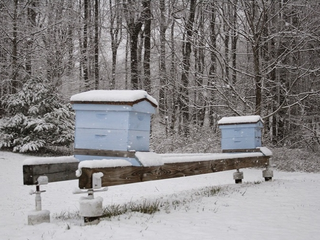 How honey bees keep warm in winter?
