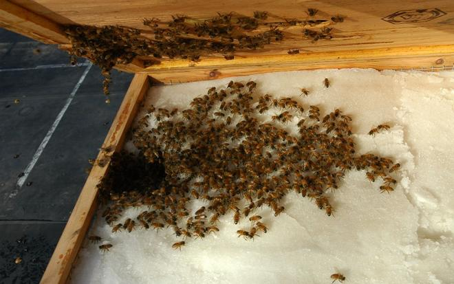 Winter feeding of honey bees: Yes or No?