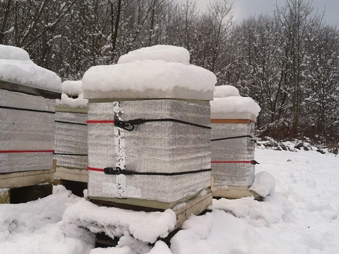 Seven ways to check on your hive during winter